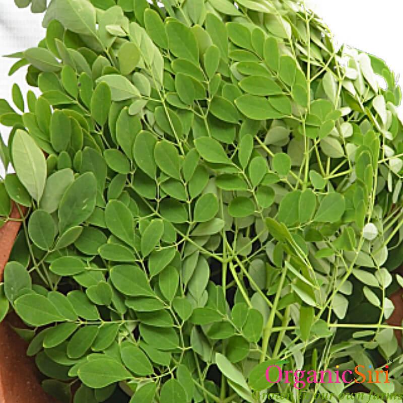munagaku leaves