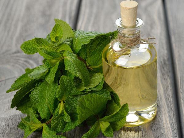 mint oil preparation for hair